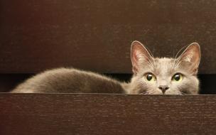 Un gato oculto