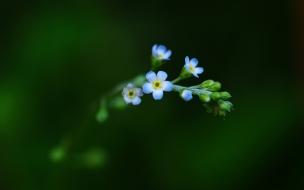 Flores en miniaturas