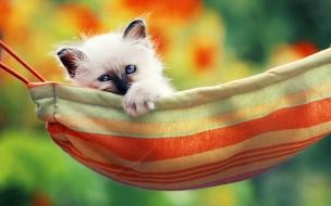 Gato en la maca