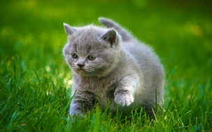Gato bebe saltando