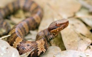Una serpiente aterradora