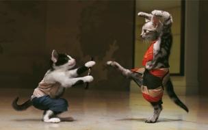 Gatos practicando Kung Fu