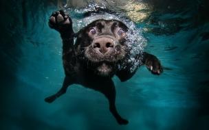 Perro en el agua
