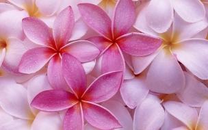Flores de pétalos rosadas