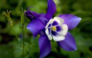 Flores purpuras