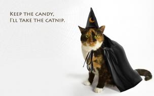 Disfraz para gatos