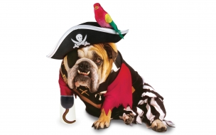 Perro Pirata