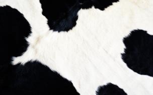 Textura de cuero de vaca