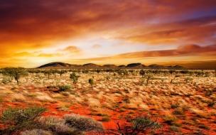 Bosque desierto al atardecer