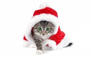 El gato Santa Claus