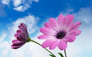 Flores moradas en macro