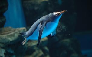 Un pinguino buceando