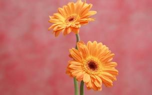 Flores bellas naranjas