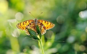 Bella mariposa en HDR