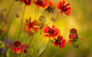 Flores y enfoques