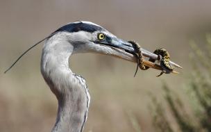 Ave caza reptil