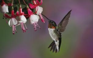 Un picaflor volando en las flores