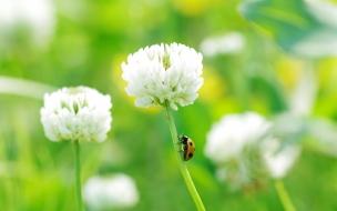 Flor y unos insectos