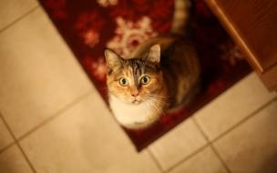 Un gato levantando la mirada
