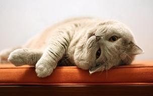 Una tierno gatito acostado