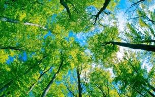 Textura de árboles