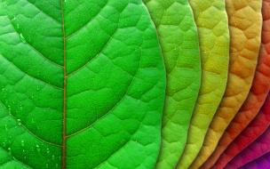 Hojas de árbol de colores