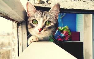 Foto artística de gatos