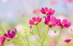 Flores japonesas hermosas
