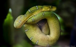 Una hermosa serpiente verde