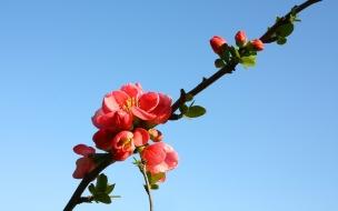 Flores y hermoso cielo