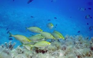 Fondos marinos con peces