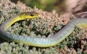 Serpiente verde de arboles