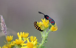 Una pareja de insectos