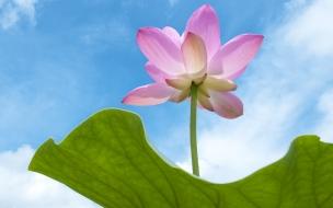 Flor rosada en el cielo