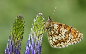 Mariposa en macro