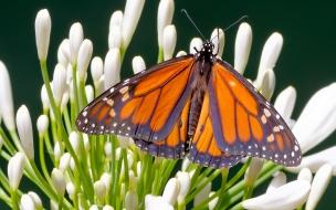 Fotos macro de mariposas