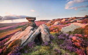 Flores de colores y rocas