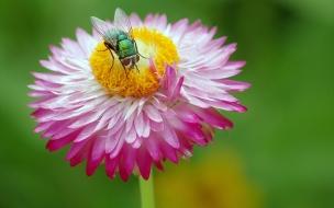 Una mosca y una flor