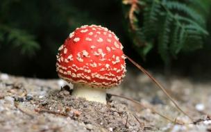 Un hongo rojo