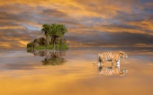 Un tigre en una isla