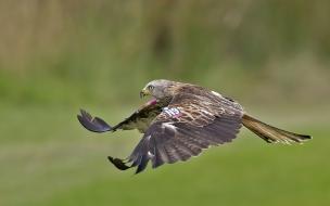 Vuelo de un Aguila