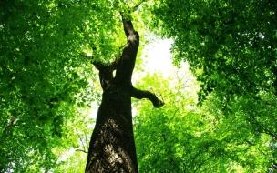 Un arbol y sus hojas verdes