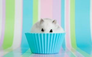 Un hamster blanco