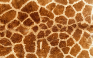 Textura de pieles de jirafas