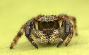 Insecto en macro