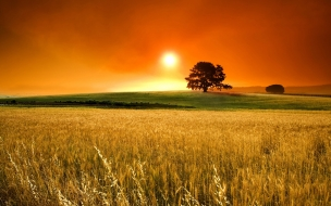 Atardecer en campos de trigo