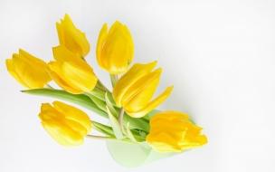 Fondo blanco y flores amarillas