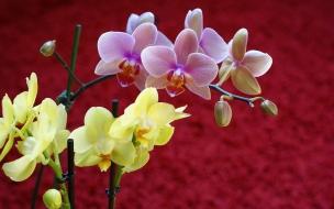 Flores amarillas y purpuras