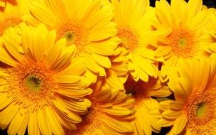 Fondo con flores amarillas