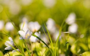 Pequenas flores blancas